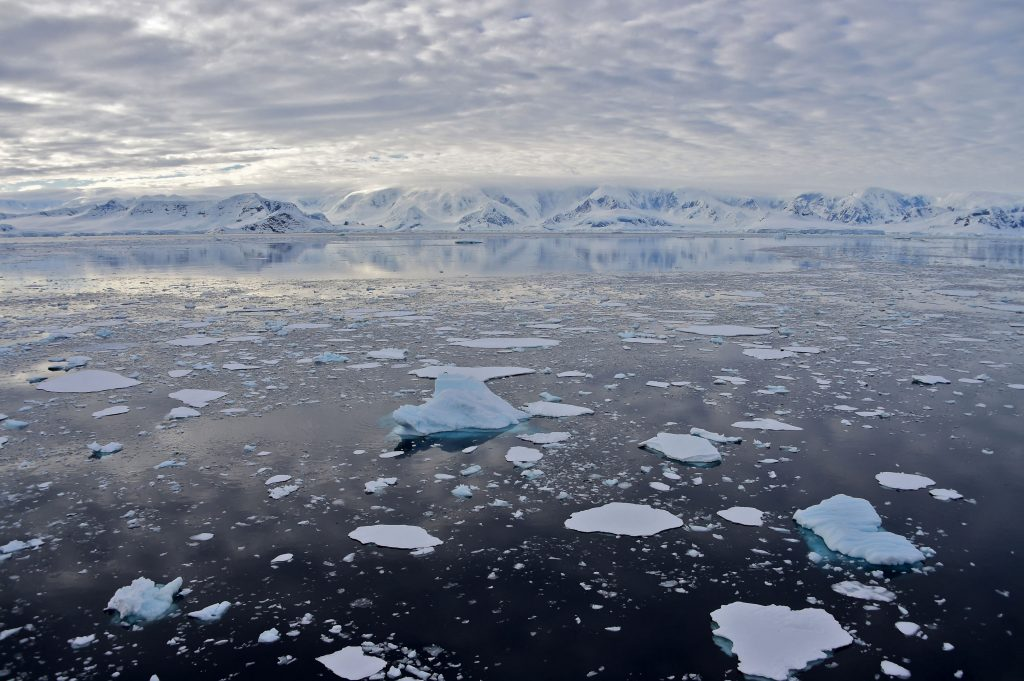 Scientists have accidentally discovered a strange creature under 900 meters of ice in Antarctica