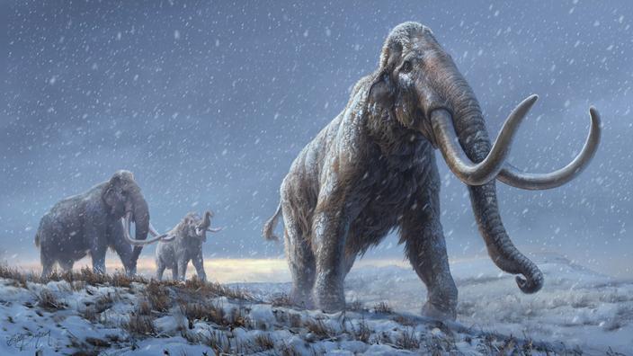 Les mammouths ont disparu il y a 4000 ans de l
