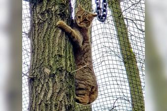 New wild cats for Moritzburg