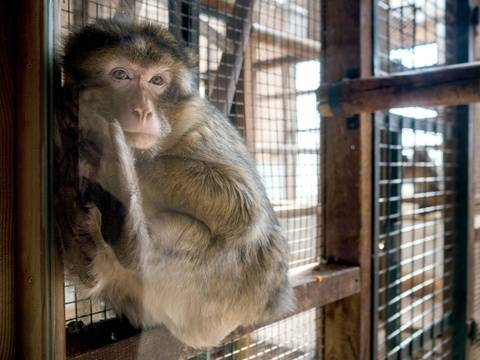 Spanish scientists have created 132 human-ape embryos in China