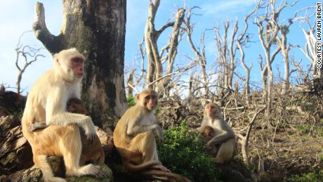 Rhesus monkeys make new friends after Hurricane Maria.