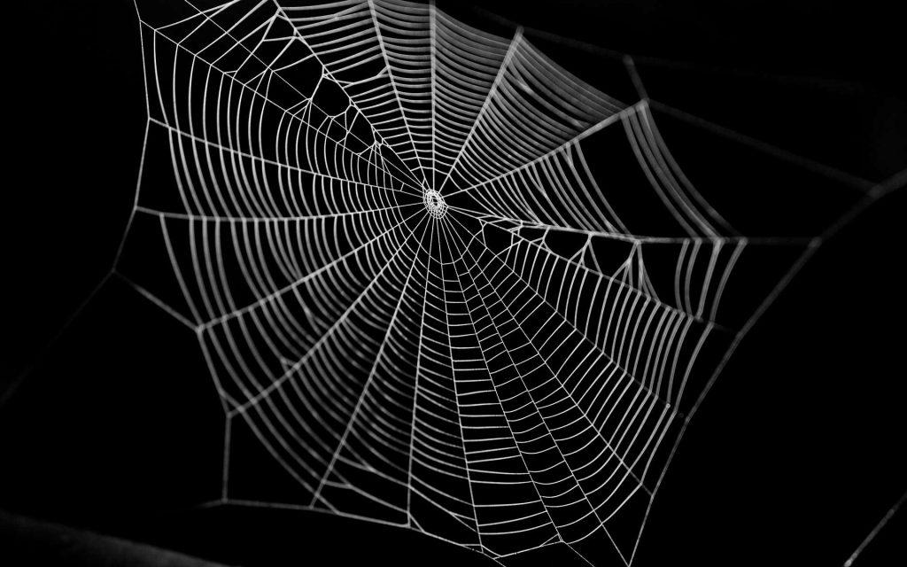 Des chercheurs du Massachusetts Institute of Technology (MIT, États-Unis) ont sonifié une toile d'araignée. Objectifs : apprendre de la nature pour améliorer nos techniques d'impression 3D, mais aussi, pourquoi pas, réussir à communiquer avec les araignées. © romeof, Adobe Stock