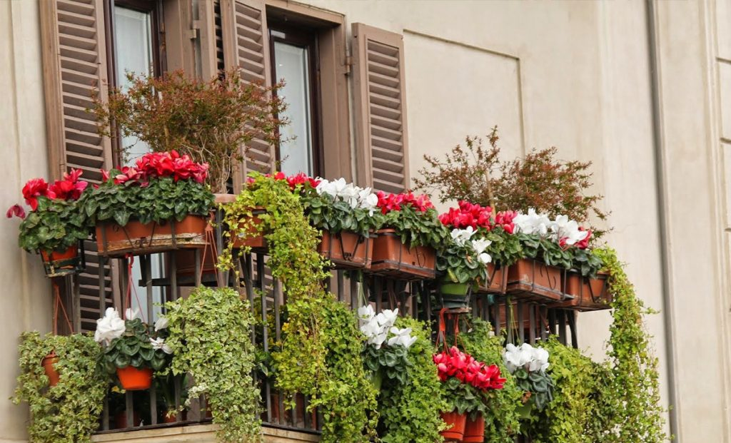 We can grow 5 wonderful and easy plants that will turn our balcony into a real fairytale garden