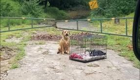 Abandoned with saddle and carrier in the middle of nowhere: the dog did not move for several days