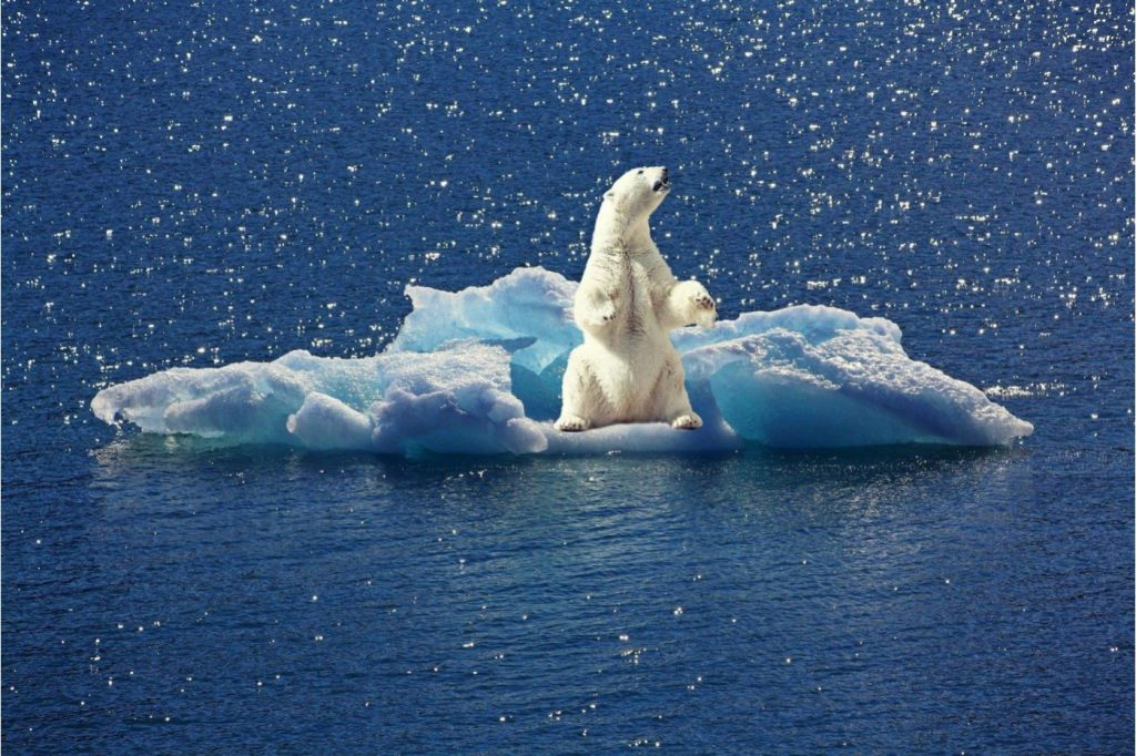 """According to a study, the natural origin of climate change is """"highly unlikely""""."""