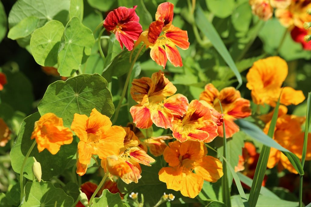 3 wonderful climbing plants that bloom in summer and give a bright red garden