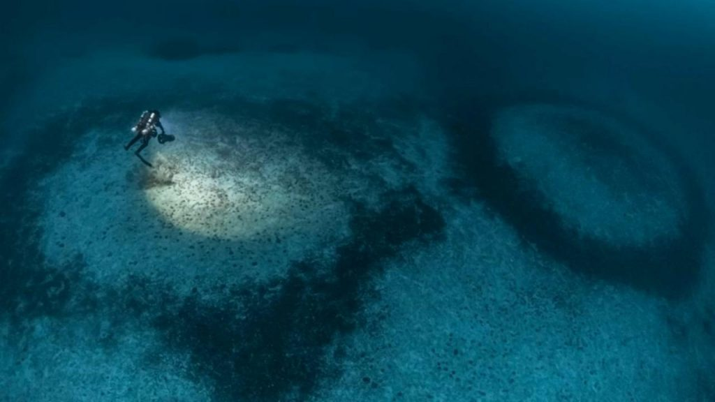 Corsica: Where do these mysterious coral rings that mark the bottom of the Mediterranean come from?