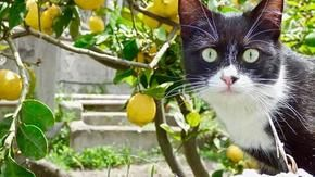 Those happy cats living in the Libari refuge were abandoned on the streets of the island