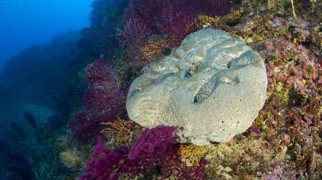 Sponge structures found in Canada may be the oldest form of life on earth
