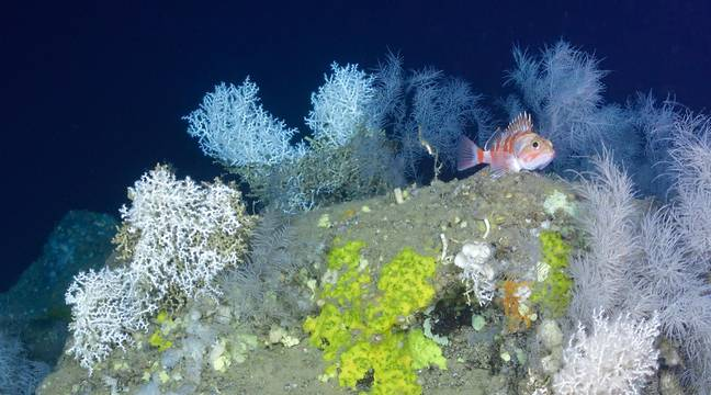 Twenty years of monitoring pollutants, what is the state of the ocean?