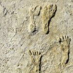 23,000-year-old human footprints rewrite American immigration history