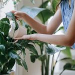 Here are some simple ways to keep houseplants healthy even in winter