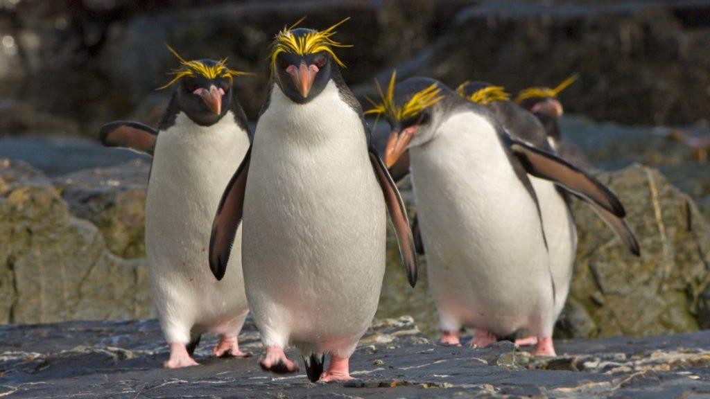 New to Linux from 11.0: Split Vom Split-User-System
