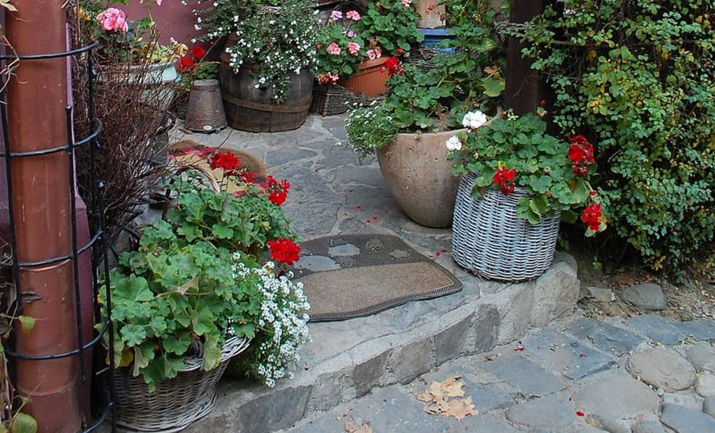 Wonderful autumn plant invented to create balconies and flower gardens